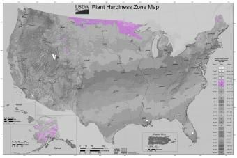 Strefa ogrodnicza USDA 3