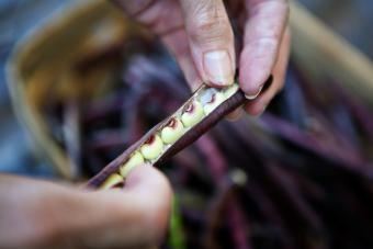 Ako variť hrášok čerstvej fialovej kôry