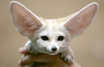 Najlepšie exotické malé domáce zvieratá, ktoré sa ľahko vlastnia