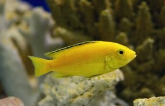 بیش از 75 نام ماهی زرد برای حیوان خانگی زنده شما